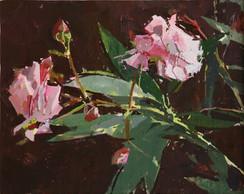 Oleander - Sold