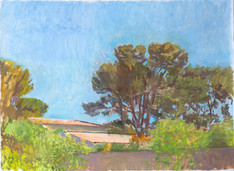 Pine Trees La Ciotat, Middle of the Day - Sold