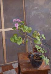 Pink Geraniums - Sold
