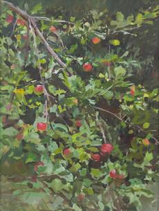 Apple Tree - Sold