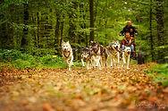 Sled_dog_ride_saint_Symphorien_©Elisa_P