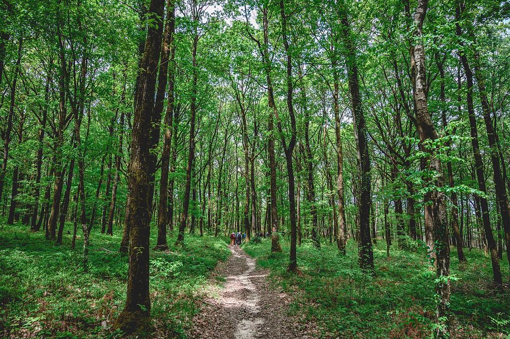 Sillé Forêt