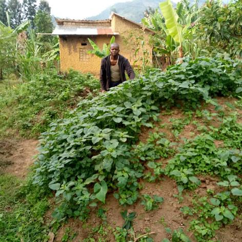 마을 채소밭 가꾸기