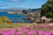 Pacific Grove.CA.USA.jpg