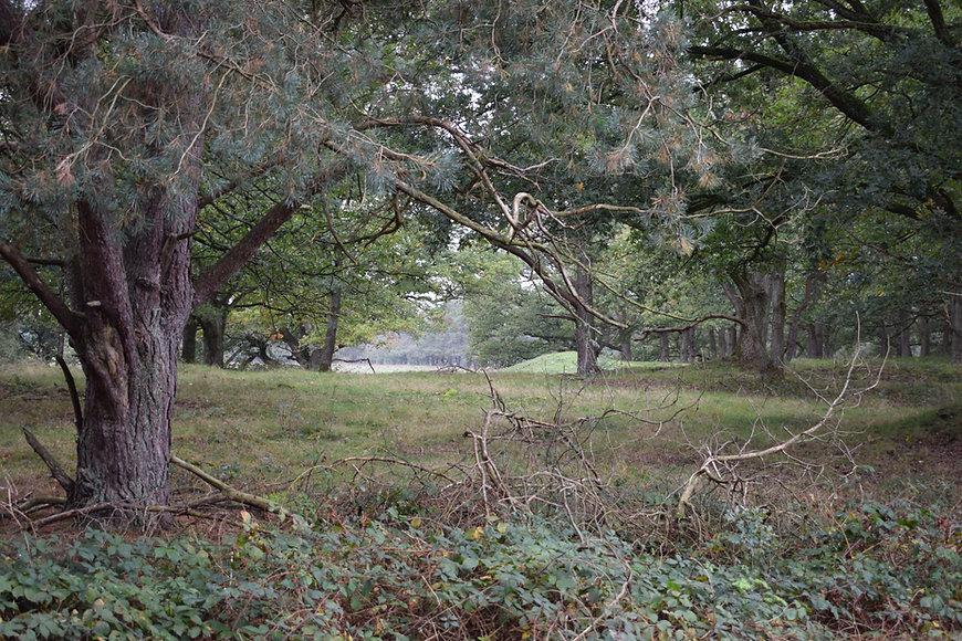 Wolfheze woods 14OCT2020 (12).JPG