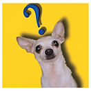 Dog Question.png