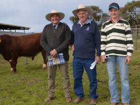 Barana Simmental bulls reach $13,000 at Coolah