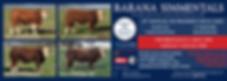 T24 2019 Barana Simmentals Advert 130620