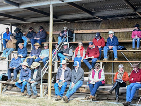 Barana Simmentals field strong demand for heifers during annual sale