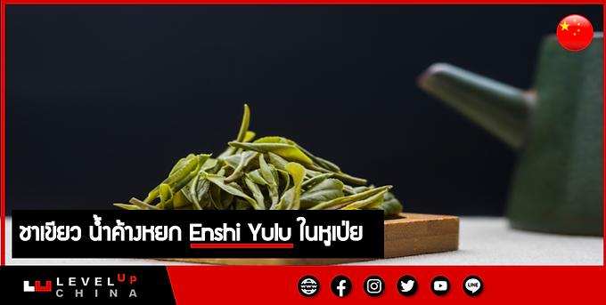 ชาเขียว น้ำค้างหยก Enshi Yulu ในหูเป่ย