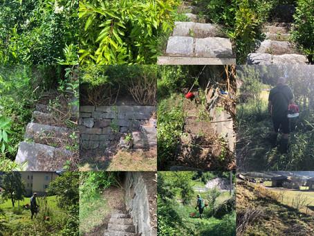 Jungle ...no more