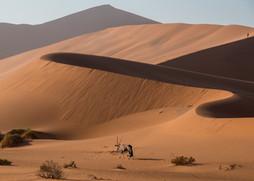 """""""Safari to Wild Namibia"""" (2018)"""