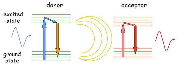 Methods_Fig2.jpg