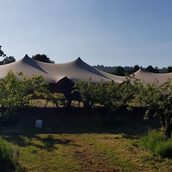 Stretch Tent in an apple orchard