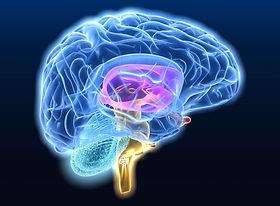 Νευροεκφυλιστική νόσος.jpg