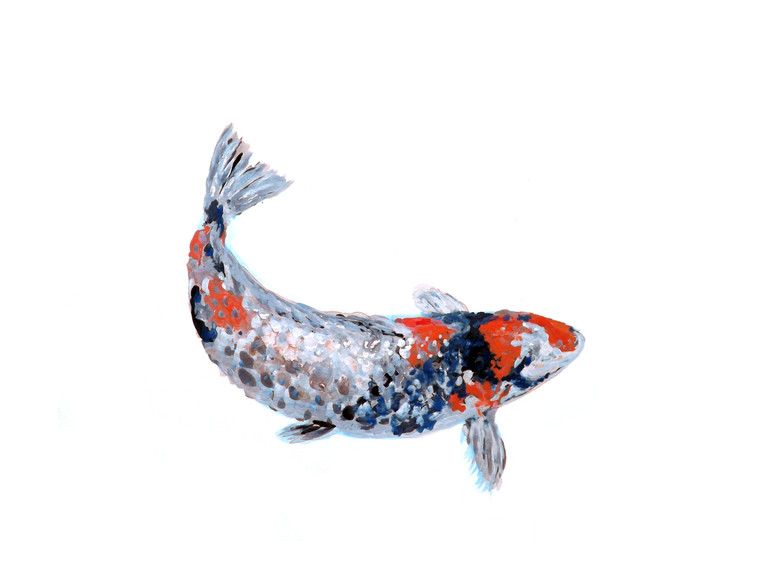 Koi Story series B Fish Out of Water