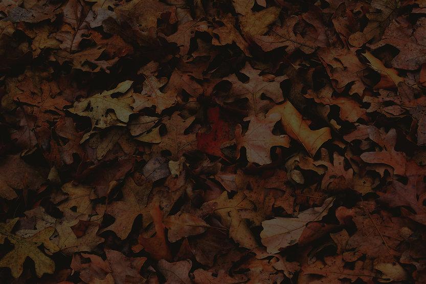 Autumn%20Foliage_edited.jpg