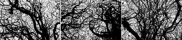 gurd15_ghost_trees_Triptych.jpg