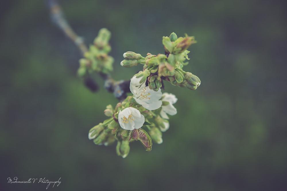 Fleurs by Mademoiselle V' Photography, Photographe Jura