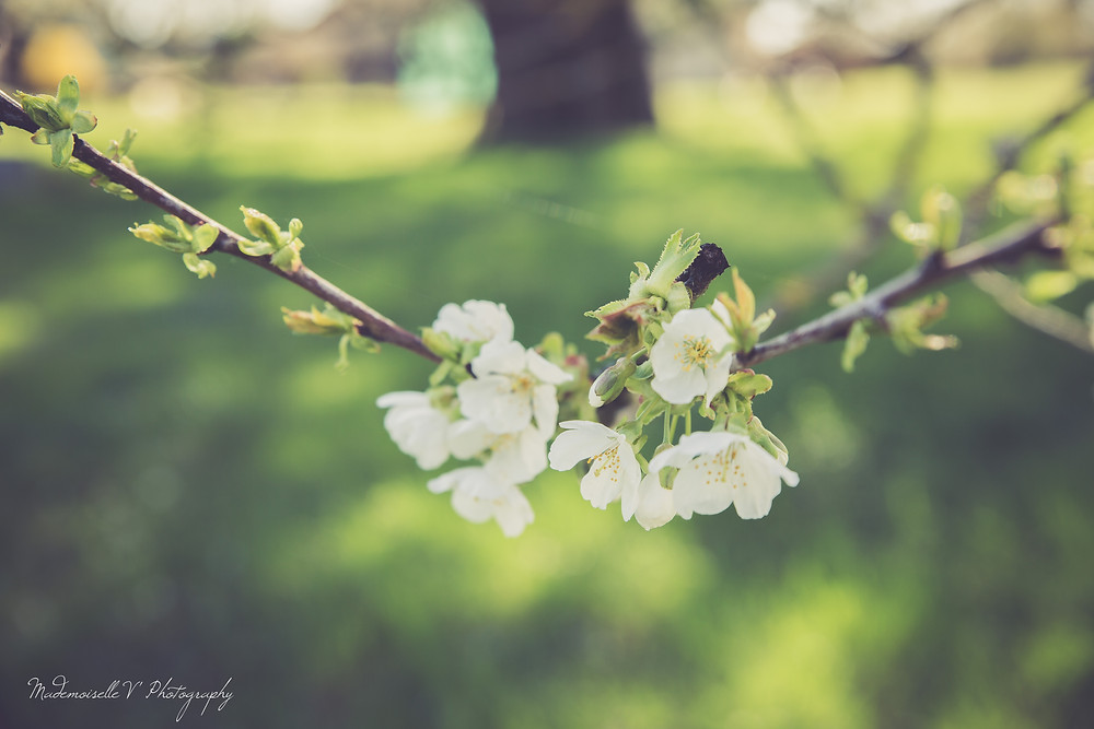Fleurs by Mademoiselle V' Photography