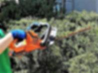 Shrub Pruning2.jpg