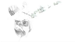 PEACE (The White Version)
