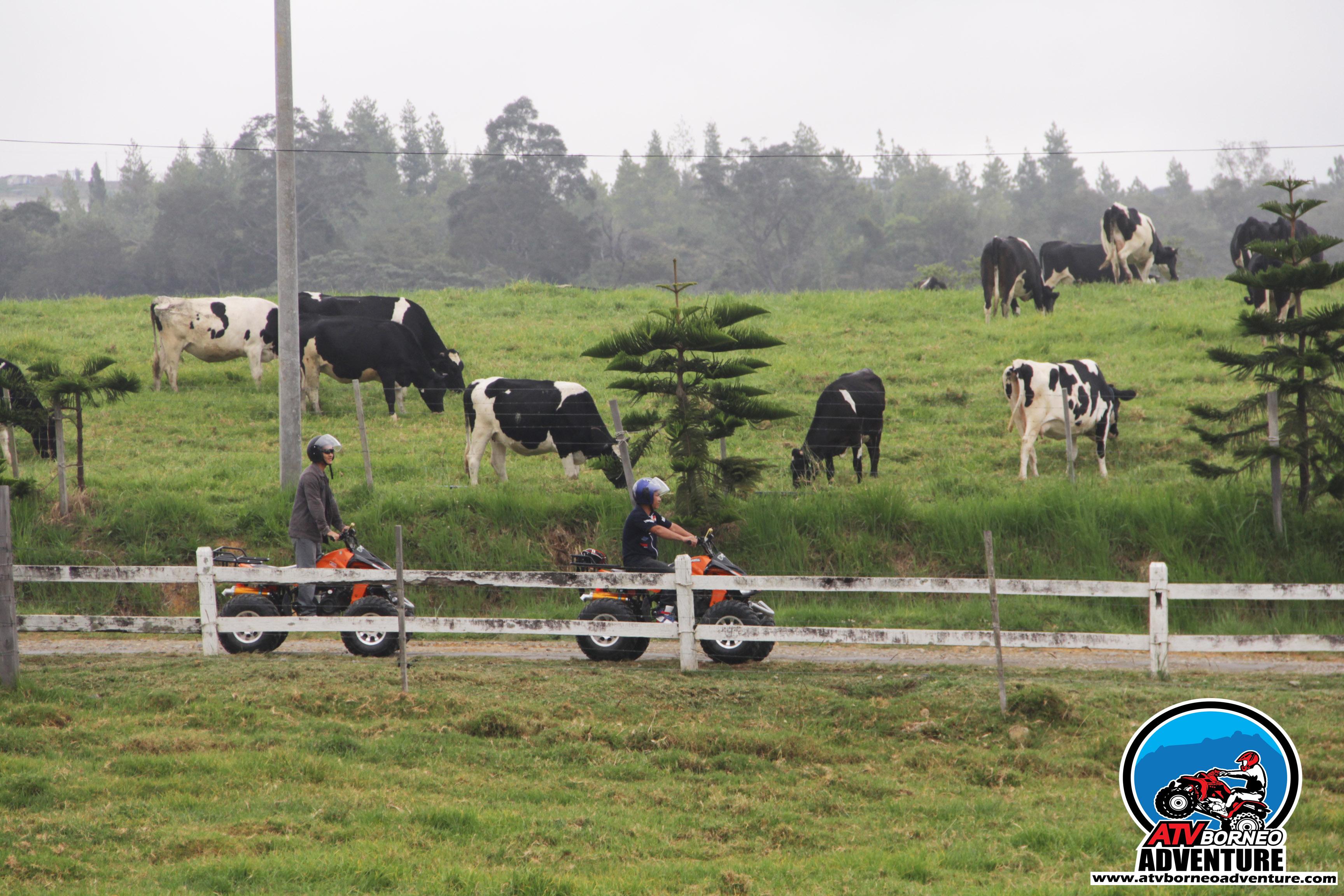 ATV Trip Desa Farm 03.jpg