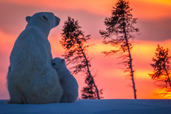 polar-bear-cubs-leave-den