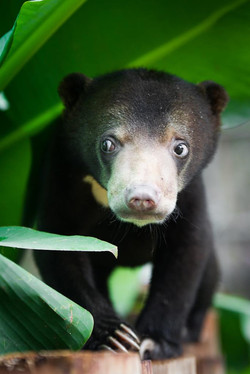Sun bears are precious and deserve great