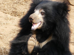 Savitha is one of the naughtiest bears a