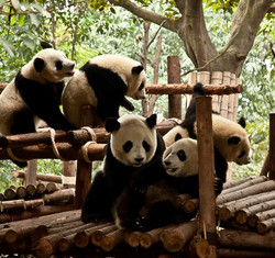 Wolong National Nature Reserve 5