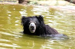 Aishwarya bear is feeling all clean and