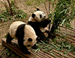 Wolong National Nature Reserve 3