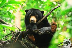 Debbie, 5 years old female adult bear