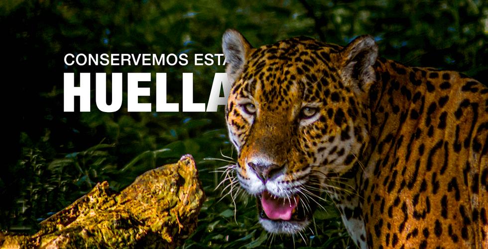 Banner-1-jaguar.png