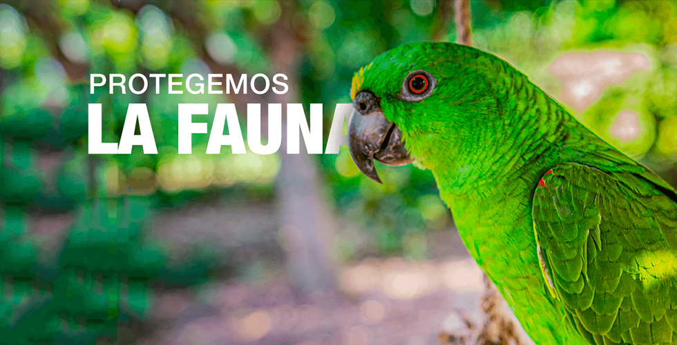 Banner-4-loro.png