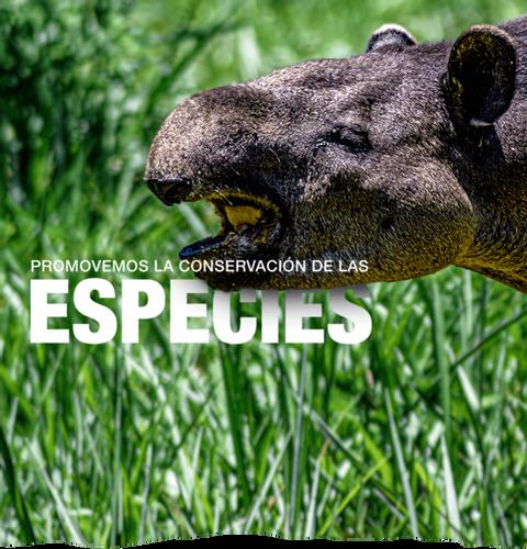 Banner-2-tapir.png