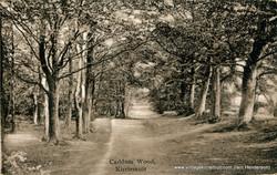 Caddam Wood, Kirriemuir (1925)