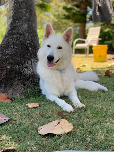 Hina & A Litter Pup