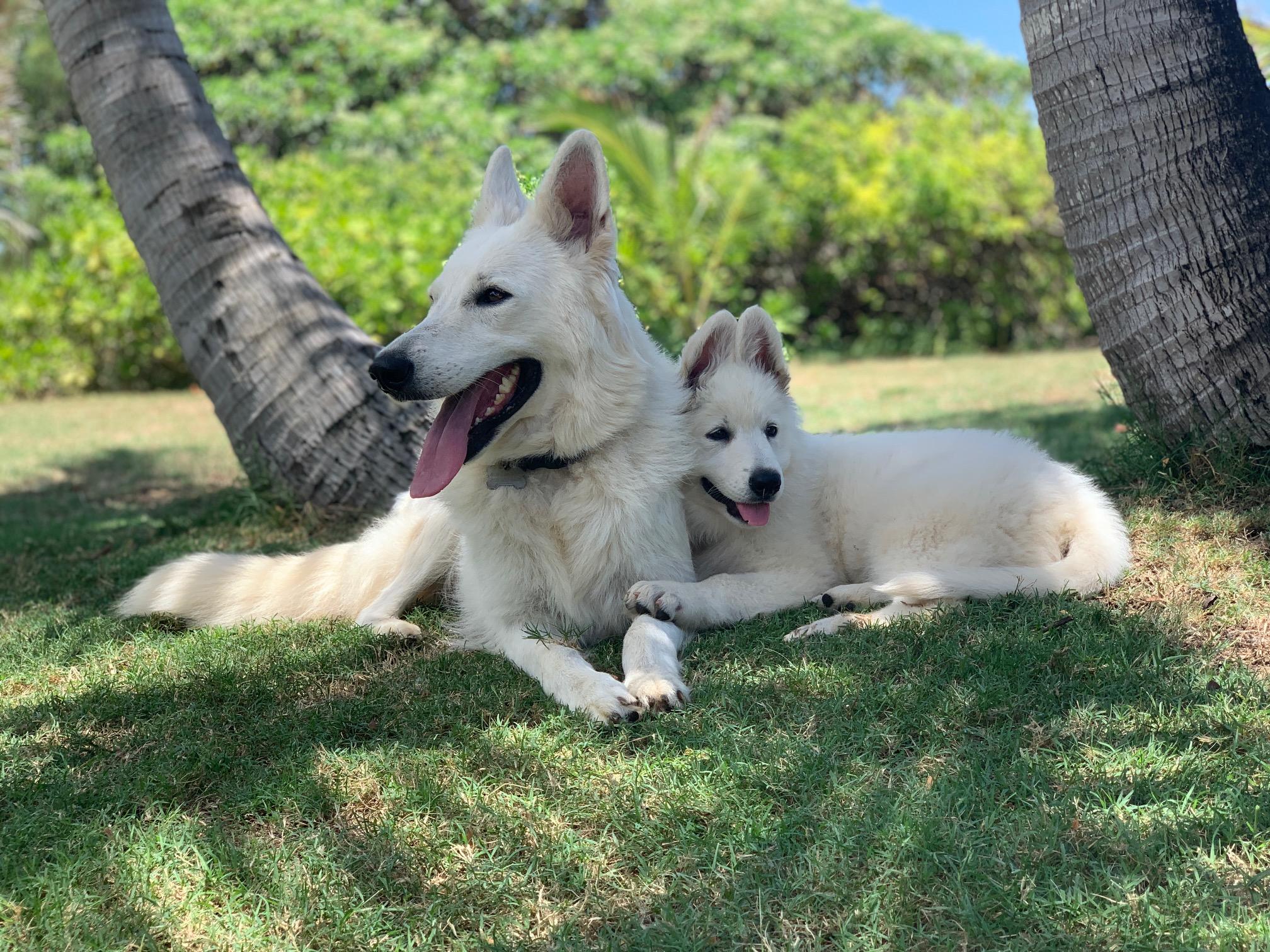 Hina & Duch
