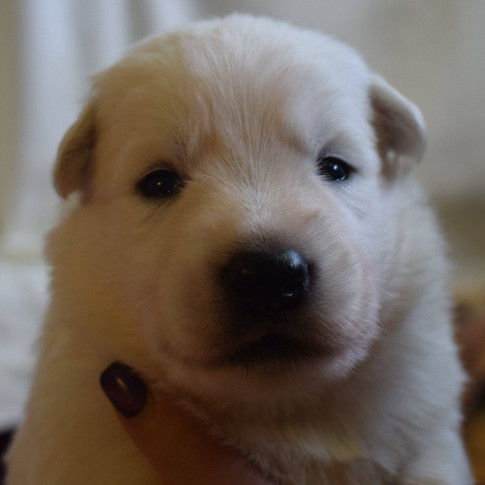 Baby Georgie