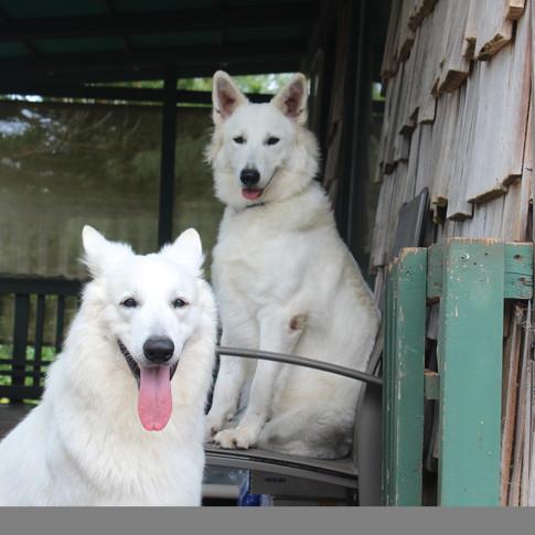 Georgie & Hina