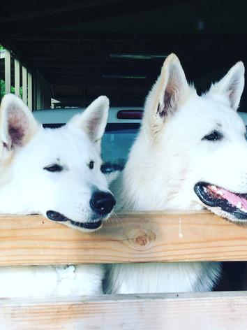 Hina & Georgie
