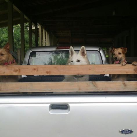 Izzy, Hina, & Dazey