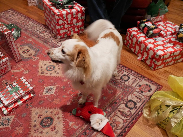 Holly & her gift