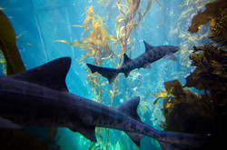 2015-03-25 - Monterrey Bay Aquarium - 050