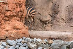 2017-03-11 - Zoo Atlanta - 070