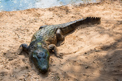2016-12-22 - Madras Crocodile Bank - 111