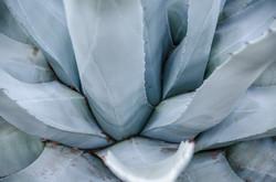 2015-02-14 - Desert Botanical Gardens - 041