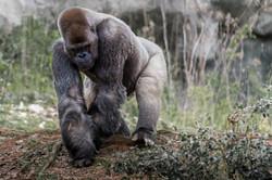 2017-03-11 - Zoo Atlanta - 047